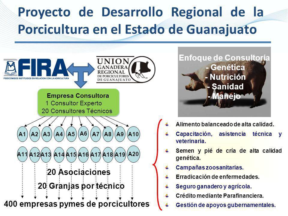 Proyecto de Desarrollo Regional de la Porcicultura en el Estado de Guanajuato A11 A12A13A14A15A16A17A18A19 A20 A1A2A3A4A5 A6 A7A8A9A10 20 Asociaciones