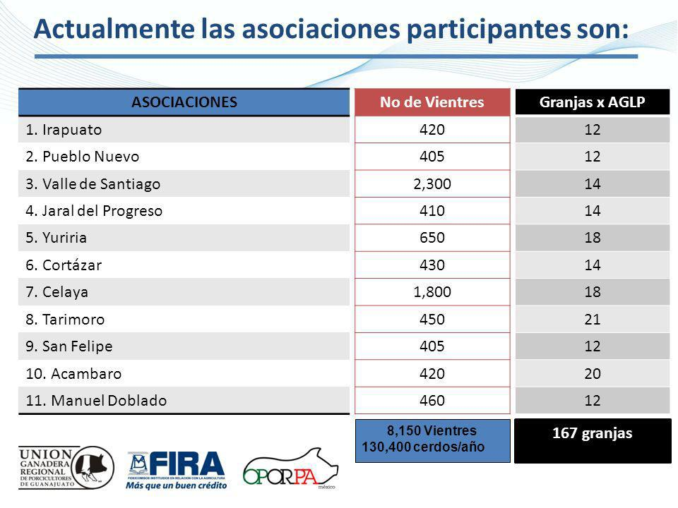 Actualmente las asociaciones participantes son: No de Vientres 420 405 2,300 410 650 430 1,800 450 405 420 460 Granjas x AGLP 12 14 18 14 18 21 12 20