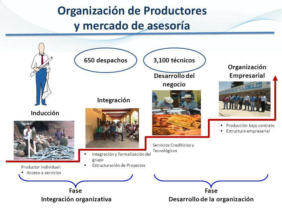 Organización de Productores y mercado de asesoría Productor individual: Acceso a servicios Integración y formalización del grupo Estructuración de Pro