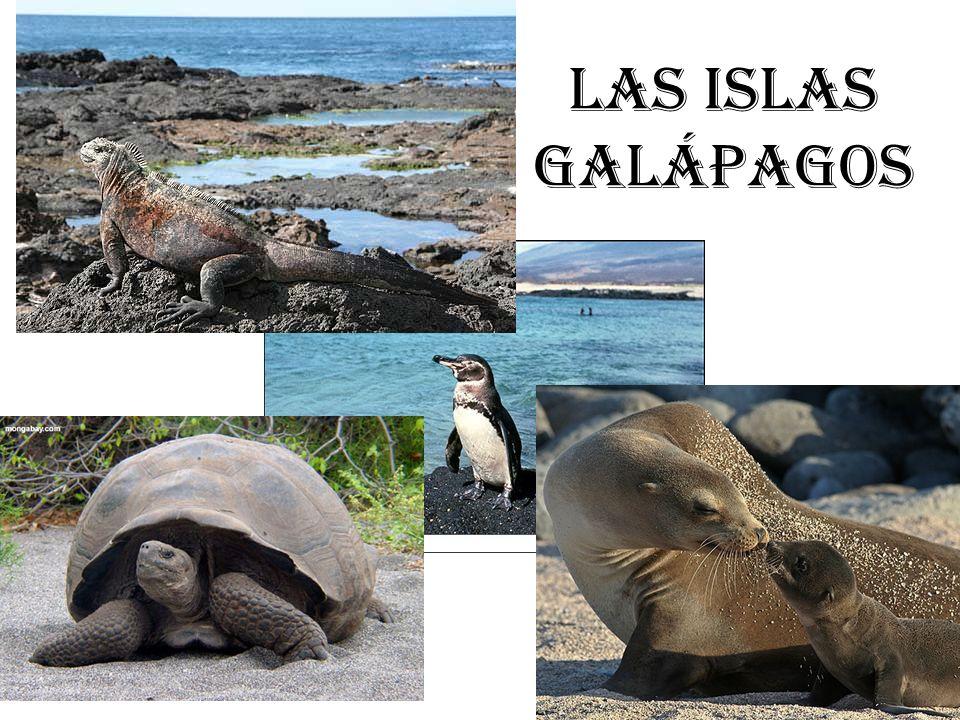 Las Islas Galápagos