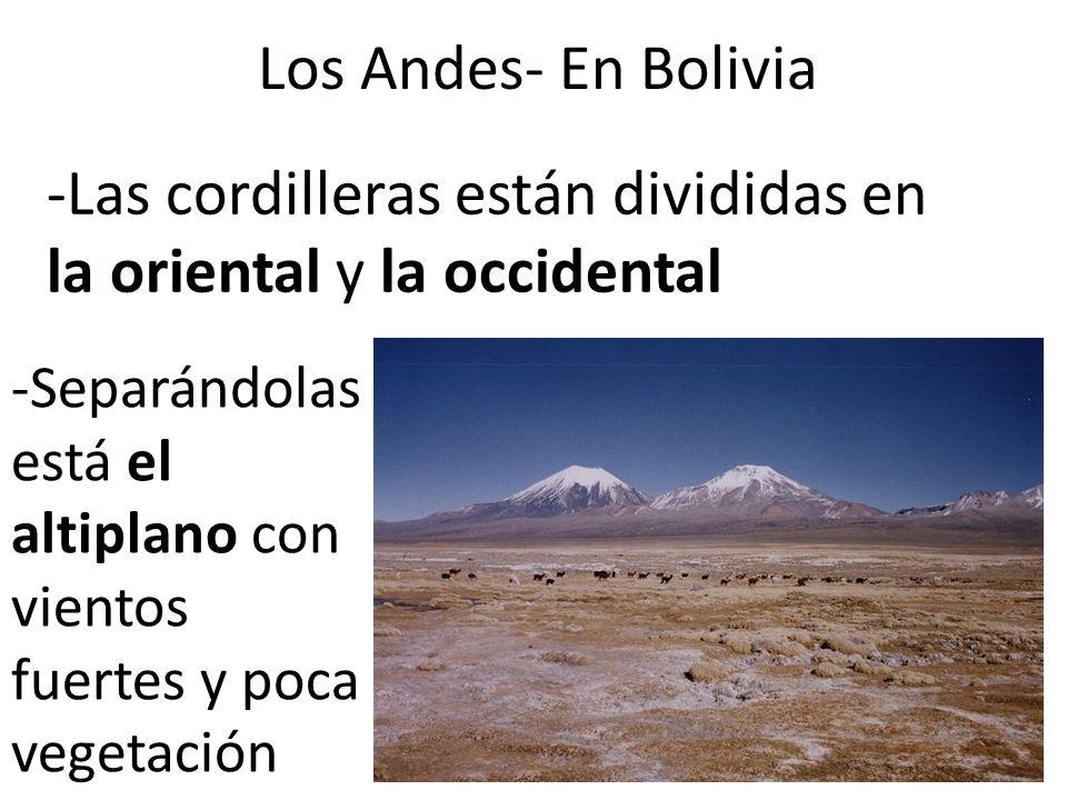 Los Andes- En Bolivia -Las cordilleras están divididas en la oriental y la occidental -Separándolas está el altiplano con vientos fuertes y poca veget