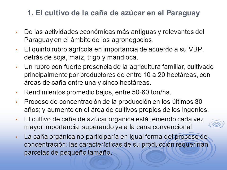 1. El cultivo de la caña de azúcar en el Paraguay De las actividades económicas más antiguas y relevantes del Paraguay en el ámbito de los agronegocio