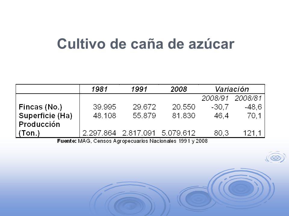Destinos de la producción Estimaciones muy variables respecto a los destinos.