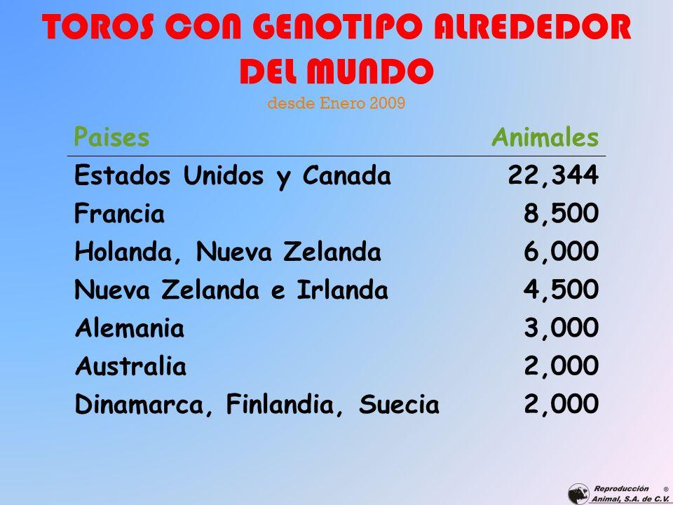 TOROS CON GENOTIPO ALREDEDOR DEL MUNDO desde Enero 2009 PaisesAnimales Estados Unidos y Canada22,344 Francia8,500 Holanda, Nueva Zelanda6,000 Nueva Ze