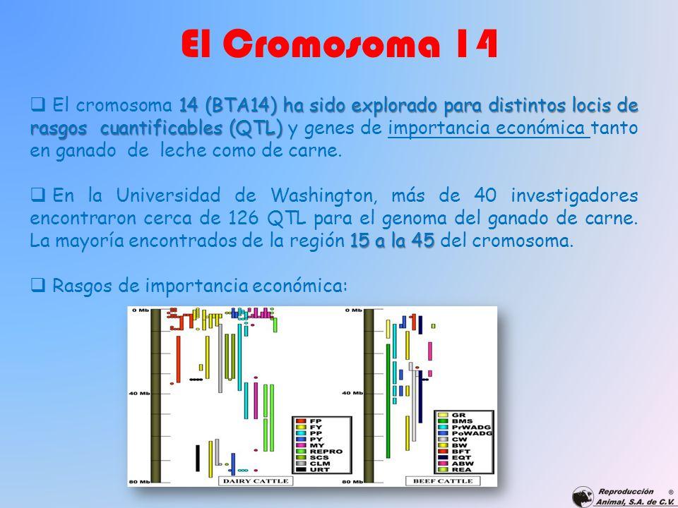 El Cromosoma 14 14 (BTA14) ha sido explorado para distintos locis de rasgos cuantificables (QTL) El cromosoma 14 (BTA14) ha sido explorado para distin