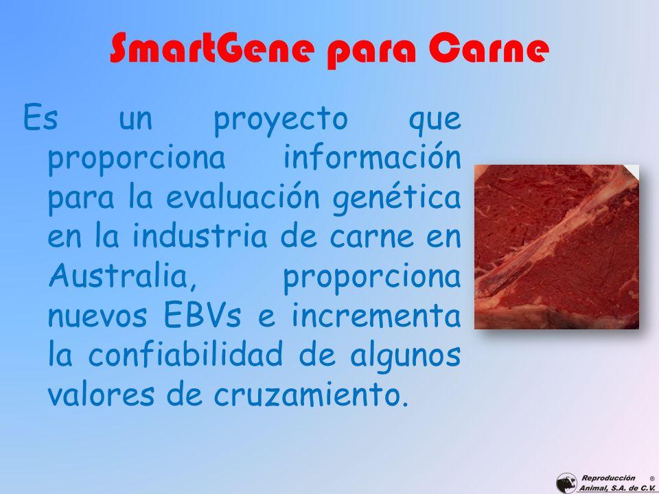 SmartGene para Carne Es un proyecto que proporciona información para la evaluación genética en la industria de carne en Australia, proporciona nuevos