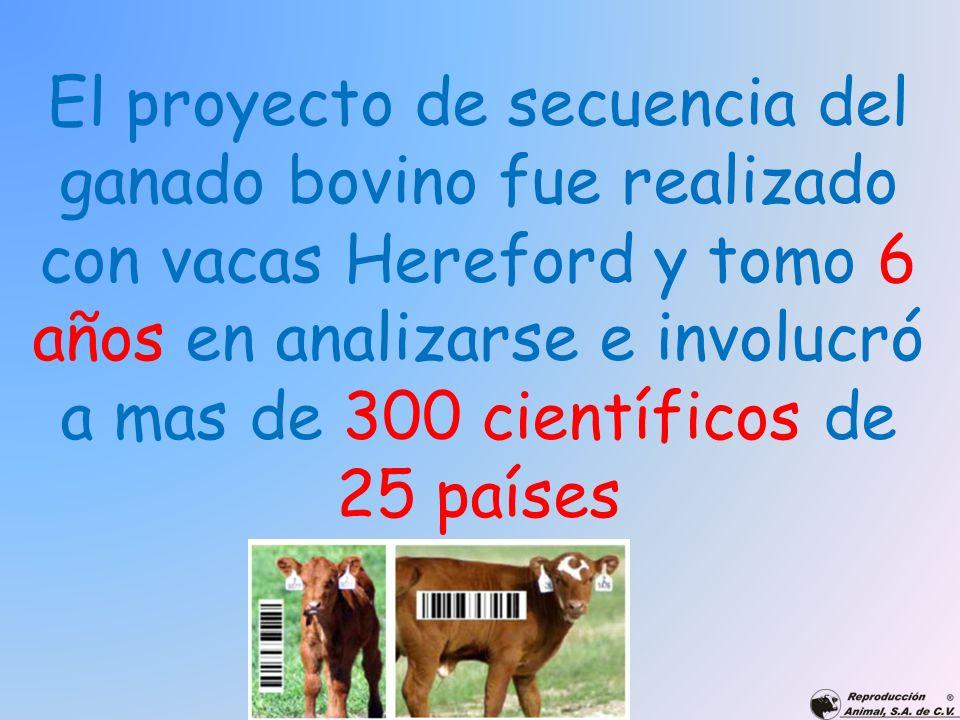 El proyecto de secuencia del ganado bovino fue realizado con vacas Hereford y tomo 6 años en analizarse e involucró a mas de 300 científicos de 25 paí