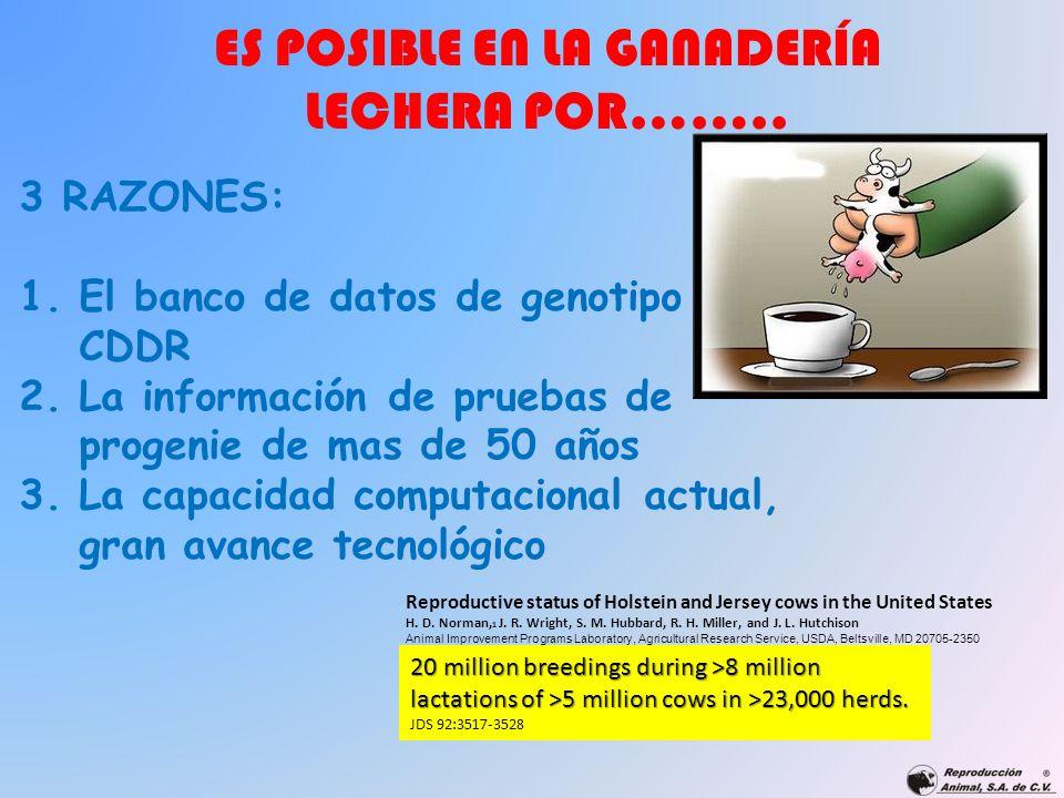 ES POSIBLE EN LA GANADERÍA LECHERA POR…….. 3 RAZONES: 1.El banco de datos de genotipo CDDR 2.La información de pruebas de progenie de mas de 50 años 3