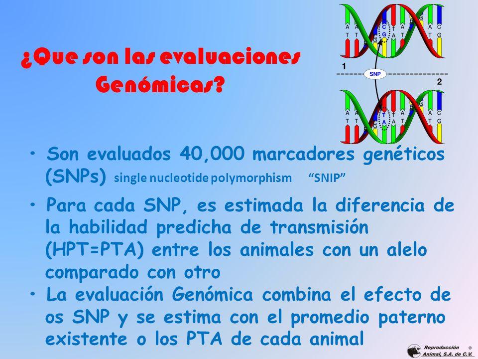 Son evaluados 40,000 marcadores genéticos (SNPs) single nucleotide polymorphism SNIP Para cada SNP, es estimada la diferencia de la habilidad predicha