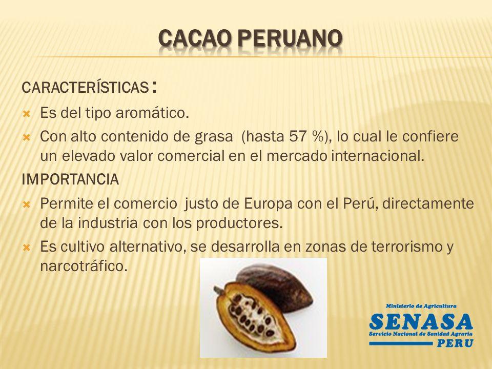 Región Superficie Cosechada (Ha) Producción (T.M) Rendimiento (Kg/Ha.) Precio (S/./Kg) Amazonas631827494355.82 Ayacucho885162637086.04 Cajamarca15909946255.94 Cusco3640871921986.28 Huánuco383718404806.83 Junin855544405196.38 La Libertad455211602.91 Lambayeque32278443.68 Loreto1781287172.58 Madre de Dios55376742.18 Pasco2622539661.84 Piura2651897135.87 Puno89677537.29 San Martin24623187647626.40 Tumbes21831114285.23 Ucayali113410329105.19 Total9246044338--- Fuente: Direcciones Regionales de Agricultura - 2010