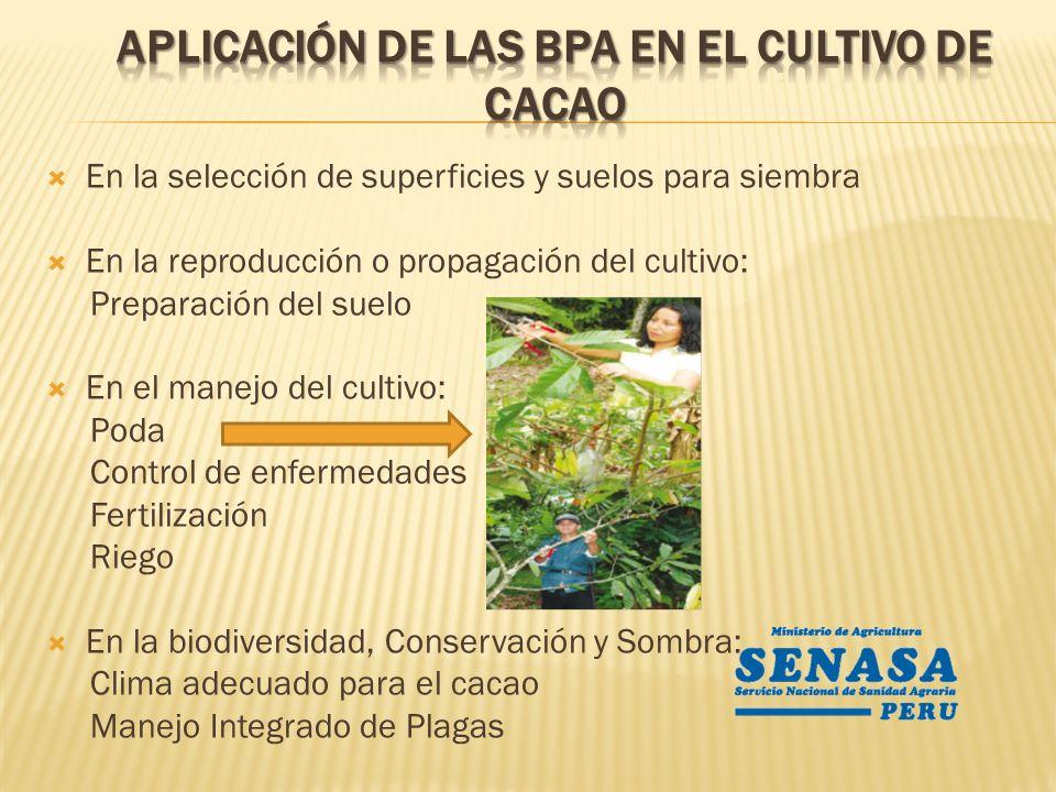 En la selección de superficies y suelos para siembra En la reproducción o propagación del cultivo: Preparación del suelo En el manejo del cultivo: Pod