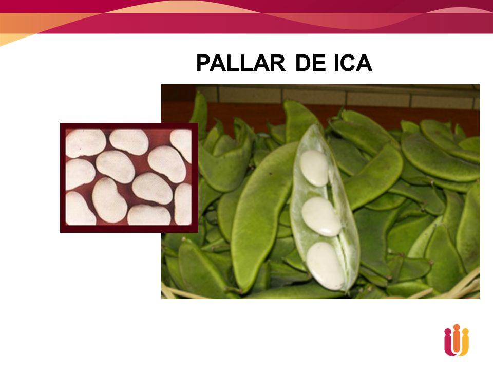 PALLAR DE ICA