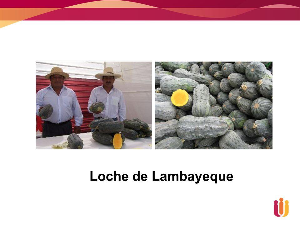 Loche de Lambayeque