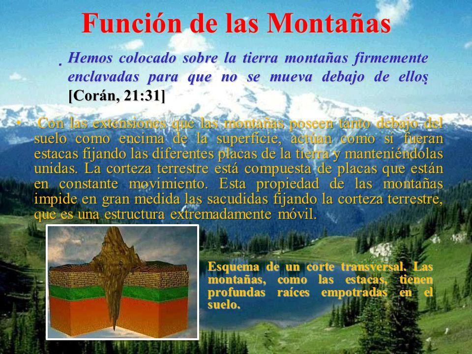 Función de las Montañas Con las extensiones que las montañas poseen tanto debajo del suelo como encima de la superficie, actúan como si fueran estacas fijando las diferentes placas de la tierra y manteniéndolas unidas.