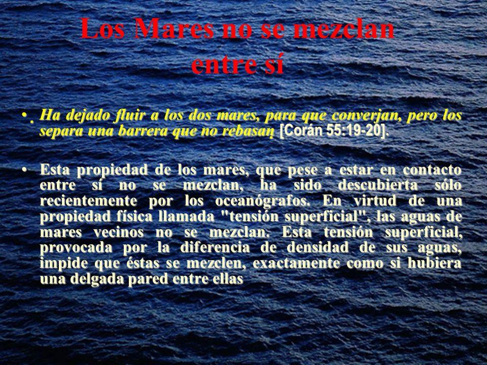 Los Mares no se mezclan entre sí Ha dejado fluir a los dos mares, para que converjan, pero los separa una barrera que no rebasan [Corán 55:19-20].