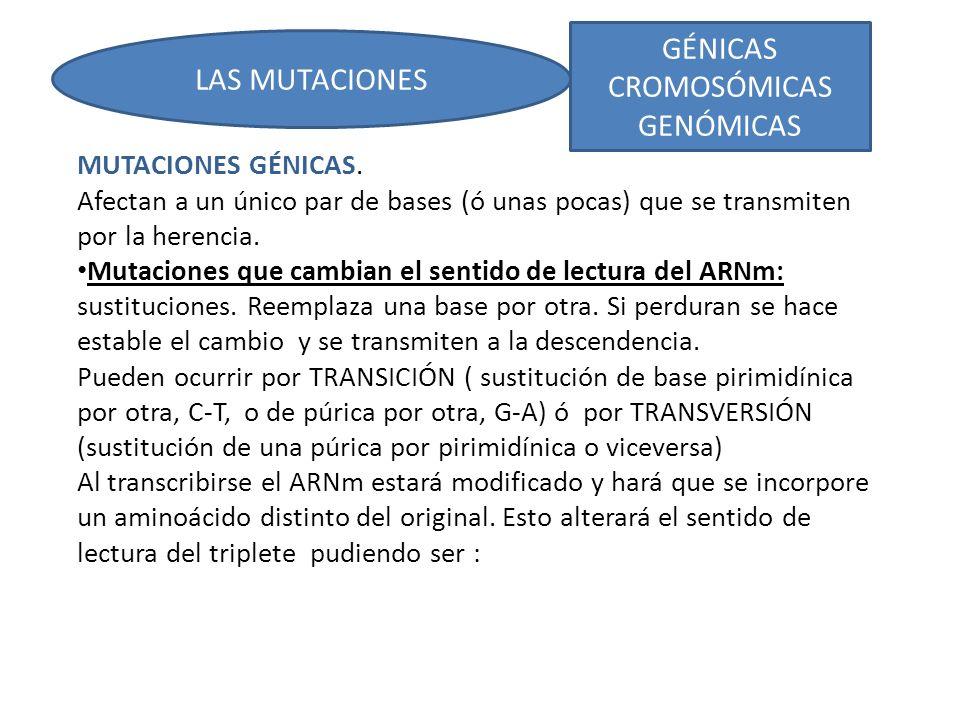 una sustitución conservadora: el aminoácido similar al sustituido por lo que cambia la secuencia pero la conformación espacial y la función siguen similares.