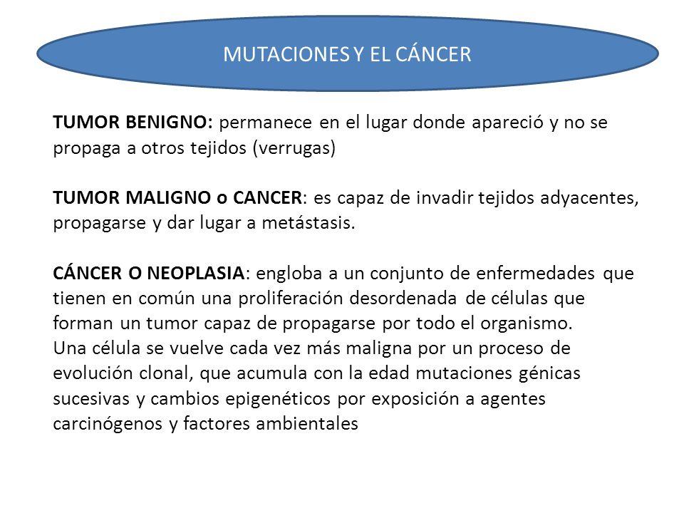 Mutaciones génicas: por exposición a los agentes mutágenos, se provoca un acúmulo de mutaciones que afecta a los genes: oncogenes, genes supresores de tumores y genes de reparación del ADN.