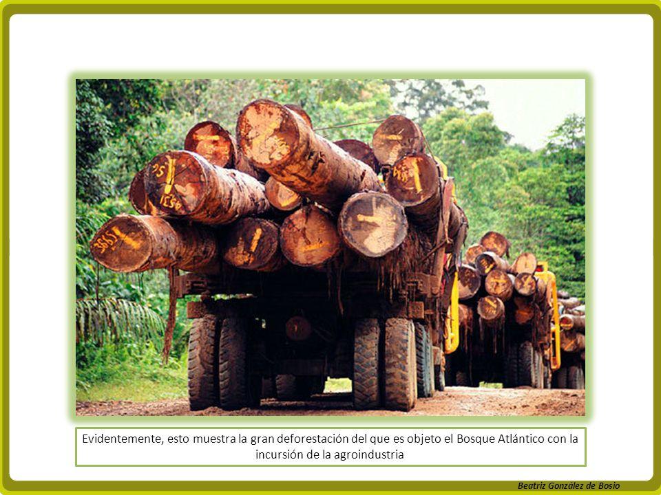 Beatriz González de Bosio Evidentemente, esto muestra la gran deforestación del que es objeto el Bosque Atlántico con la incursión de la agroindustria