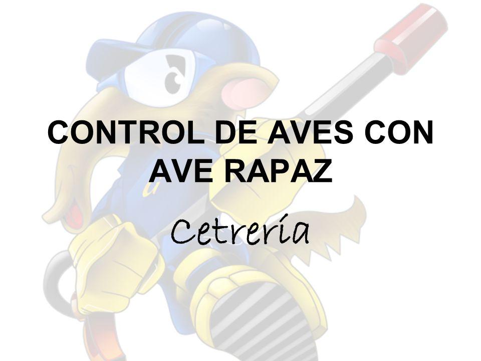 CONTROL DE AVES CON AVE RAPAZ Cetrería