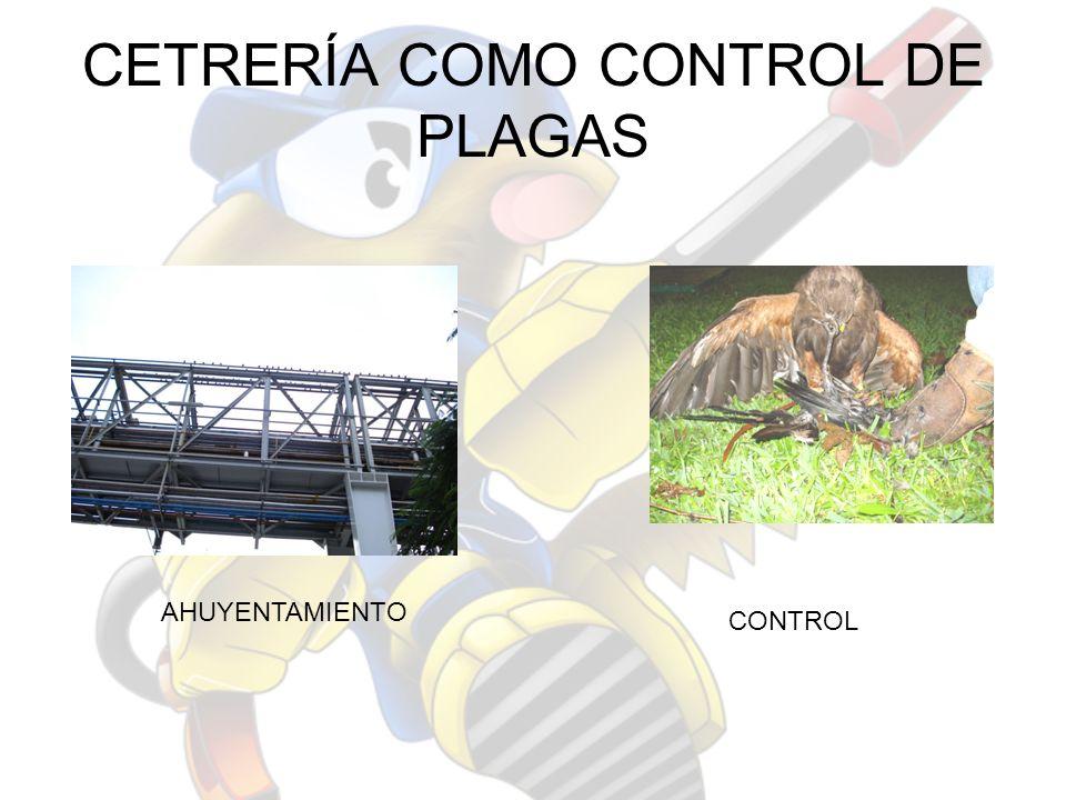 CETRERÍA COMO CONTROL DE PLAGAS AHUYENTAMIENTO CONTROL