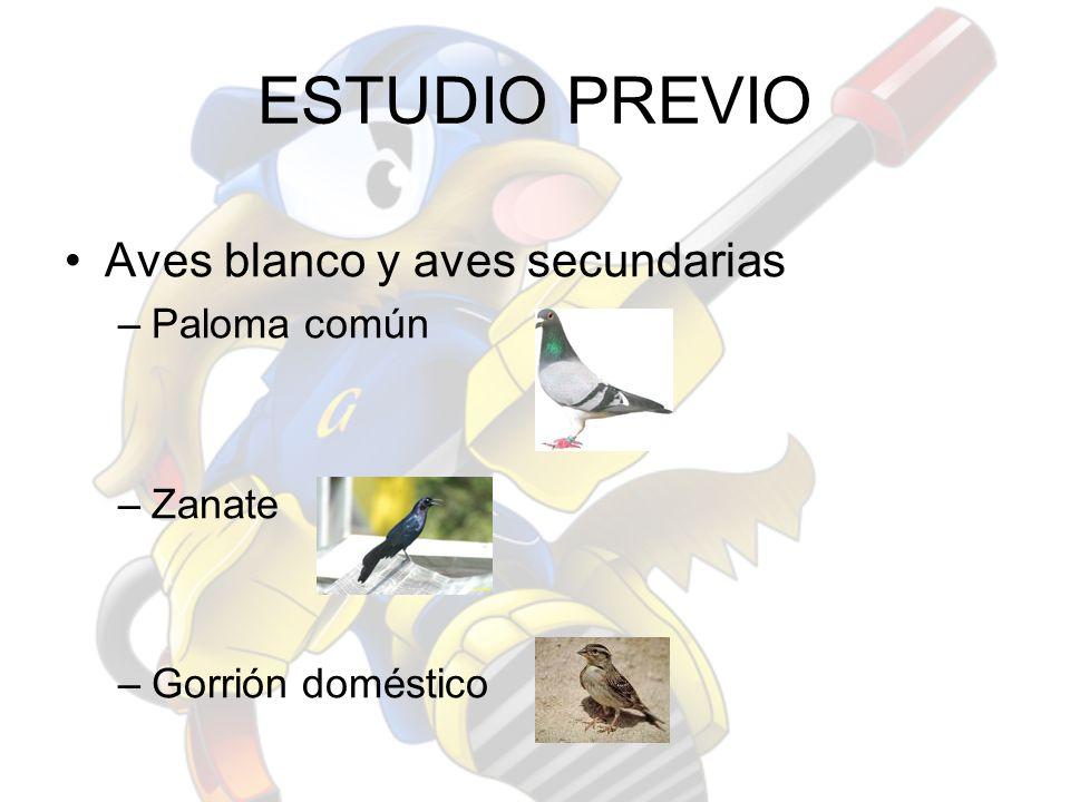 ESTUDIO PREVIO Aves blanco y aves secundarias –Paloma común –Zanate –Gorrión doméstico