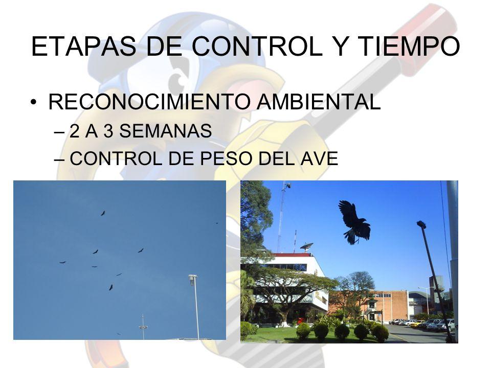 ETAPAS DE CONTROL Y TIEMPO RECONOCIMIENTO AMBIENTAL –2 A 3 SEMANAS –CONTROL DE PESO DEL AVE