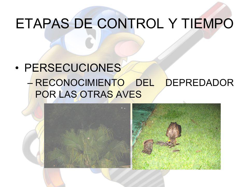 ETAPAS DE CONTROL Y TIEMPO PERSECUCIONES –RECONOCIMIENTO DEL DEPREDADOR POR LAS OTRAS AVES