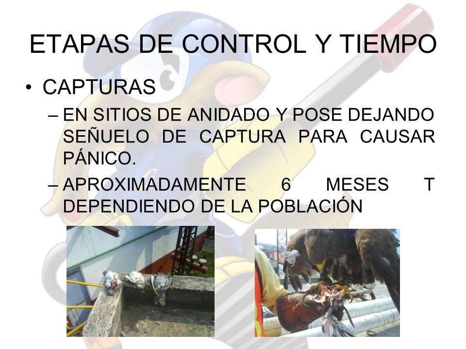 ETAPAS DE CONTROL Y TIEMPO CAPTURAS –EN SITIOS DE ANIDADO Y POSE DEJANDO SEÑUELO DE CAPTURA PARA CAUSAR PÁNICO. –APROXIMADAMENTE 6 MESES T DEPENDIENDO