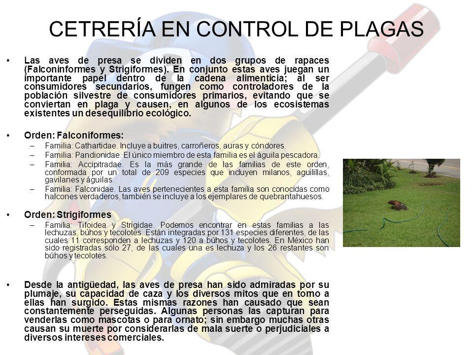 ESTUDIO PREVIO DETERMINACIÓN DE LA APLICACIÓN DE CETRERÍA U OTRO MÉTODO DE CONTROL MÁS EFECTIVO.