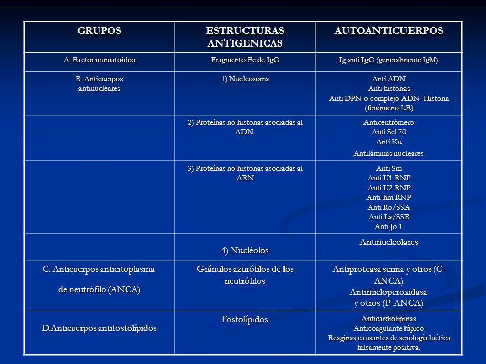GRUPOS ESTRUCTURAS ANTIGENICAS AUTOANTICUERPOS A. Factor reumatoideo Fragmento Fc de IgG Ig anti IgG (generalmente IgM) B. Anticuerpos antinucleares 1
