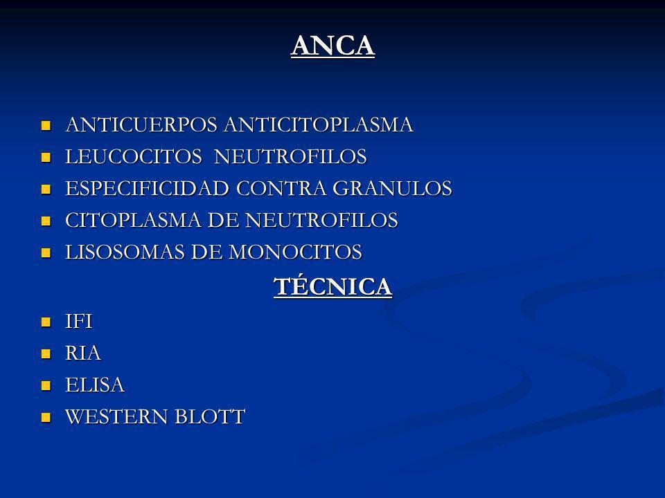 ANCA ANTICUERPOS ANTICITOPLASMA ANTICUERPOS ANTICITOPLASMA LEUCOCITOS NEUTROFILOS LEUCOCITOS NEUTROFILOS ESPECIFICIDAD CONTRA GRANULOS ESPECIFICIDAD C