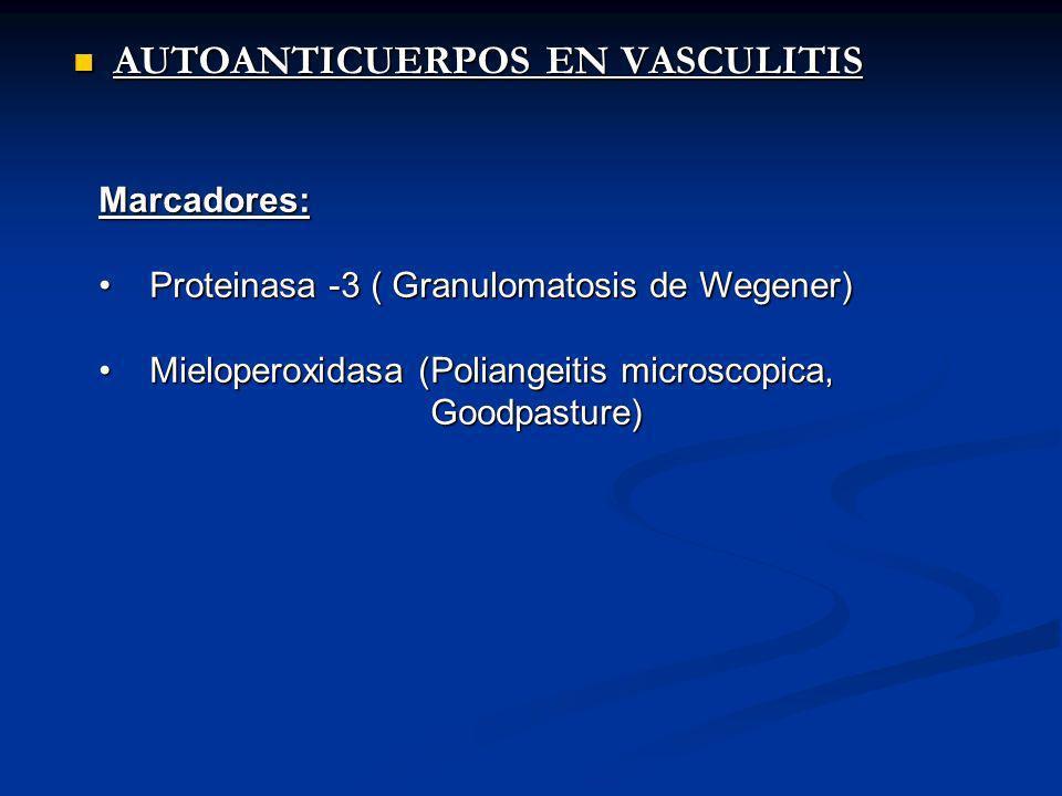 AUTOANTICUERPOS EN VASCULITIS AUTOANTICUERPOS EN VASCULITIS Marcadores: Proteinasa -3 ( Granulomatosis de Wegener) Proteinasa -3 ( Granulomatosis de Wegener) Mieloperoxidasa (Poliangeitis microscopica, Mieloperoxidasa (Poliangeitis microscopica, Goodpasture) Goodpasture)
