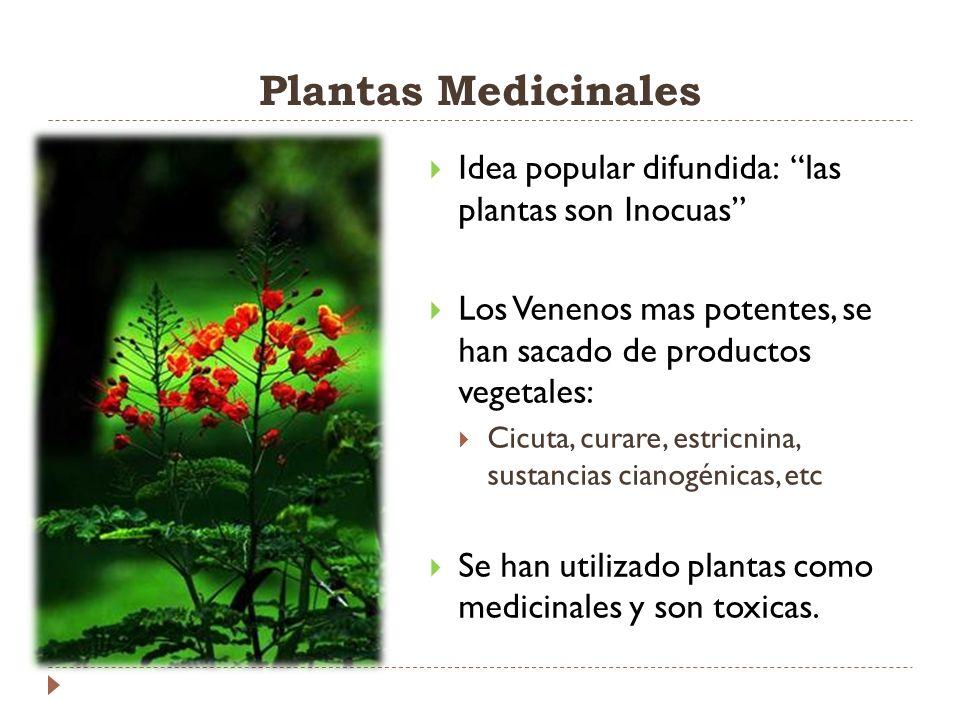 Plantas Medicinales Idea popular difundida: las plantas son Inocuas Los Venenos mas potentes, se han sacado de productos vegetales: Cicuta, curare, es