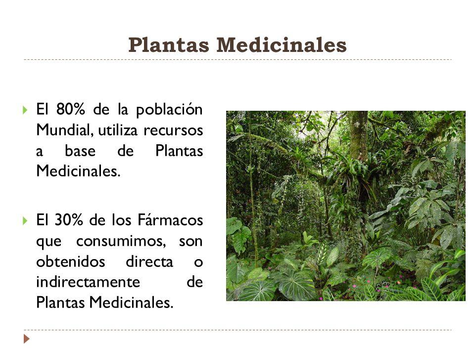 Plantas Medicinales El 80% de la población Mundial, utiliza recursos a base de Plantas Medicinales. El 30% de los Fármacos que consumimos, son obtenid