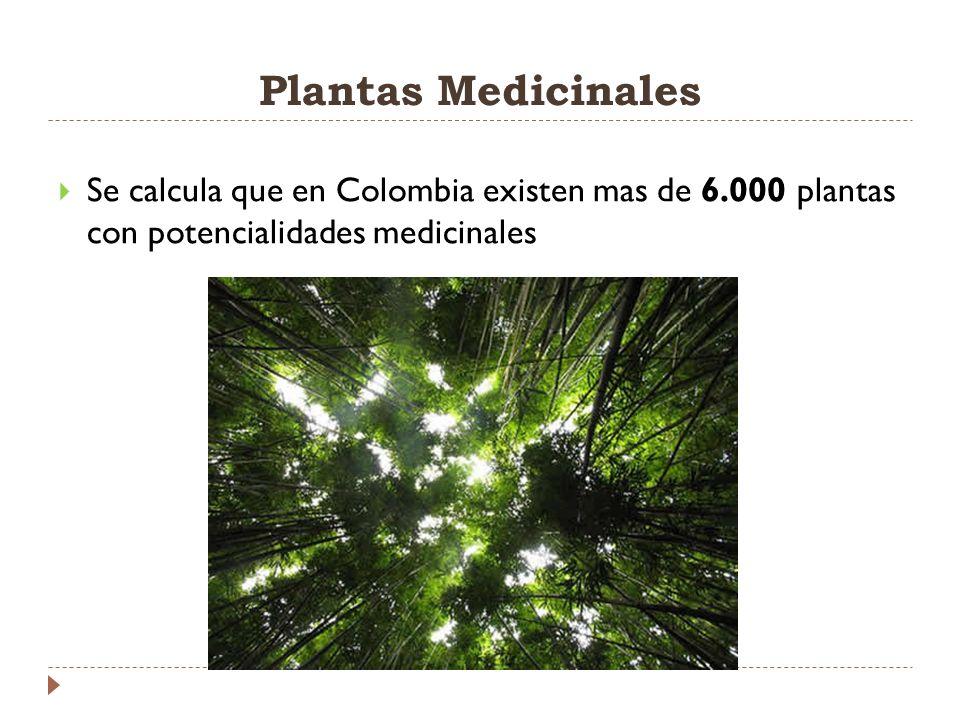 Se calcula que en Colombia existen mas de 6.000 plantas con potencialidades medicinales Plantas Medicinales