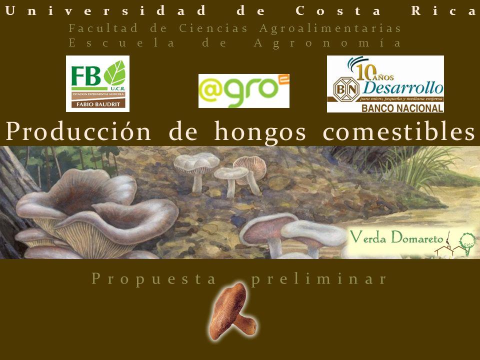 Universidad de Costa Rica Producción de hongos comestibles Propuesta preliminar Facultad de Ciencias Agroalimentarias Escuela de Agronomía