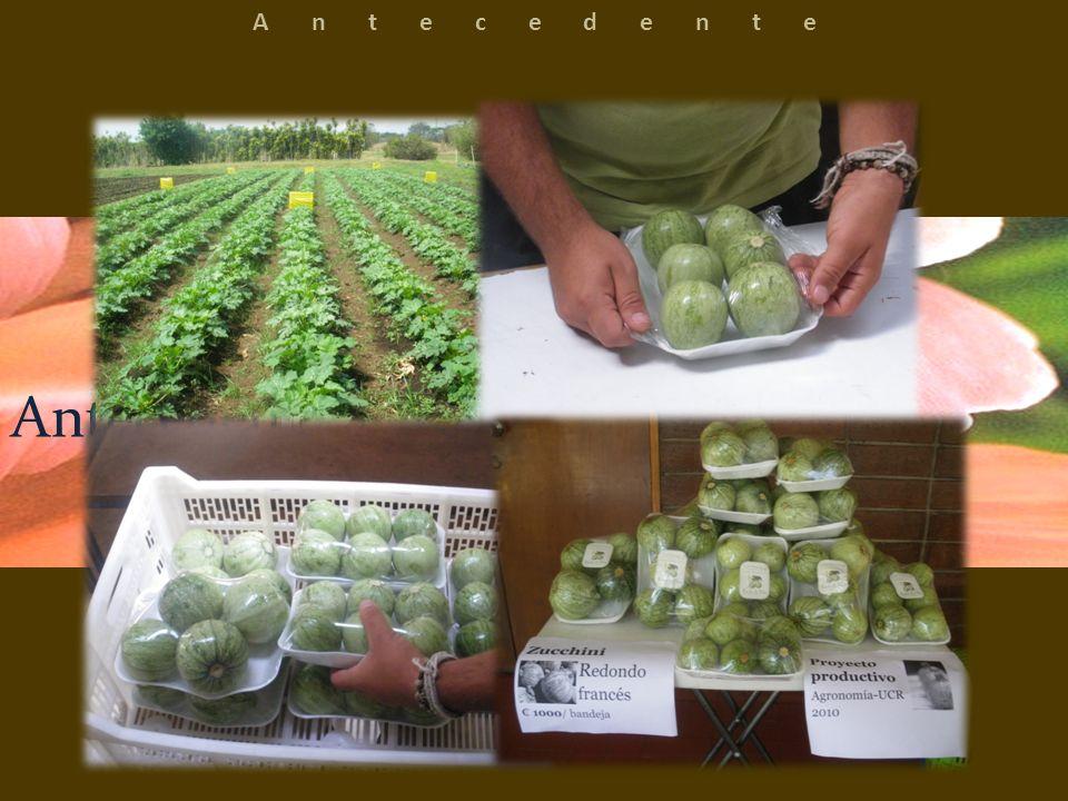 Empresa dedicada a la producción de hongos comestibles, utilizando sistemas con el menor impacto ambiental posible y un alto grado de sostenibilidad.