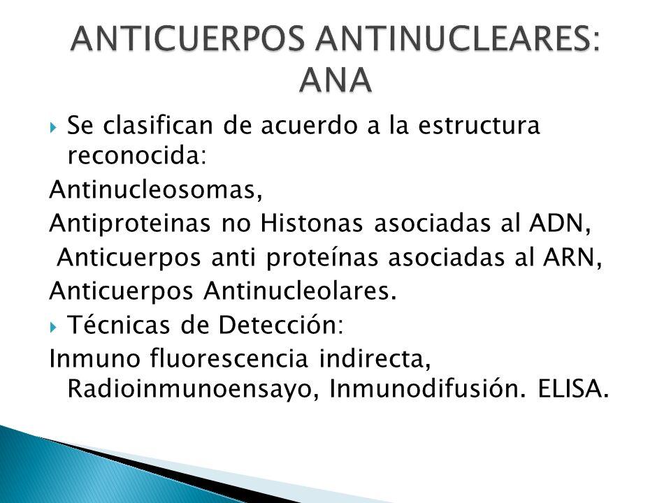 Se clasifican de acuerdo a la estructura reconocida: Antinucleosomas, Antiproteinas no Histonas asociadas al ADN, Anticuerpos anti proteínas asociadas