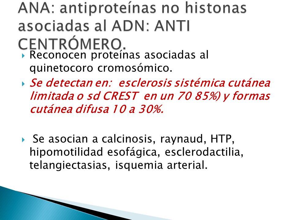 Reconocen proteínas asociadas al quinetocoro cromosómico. Se detectan en: esclerosis sistémica cutánea limitada o sd CREST en un 70 85%) y formas cutá