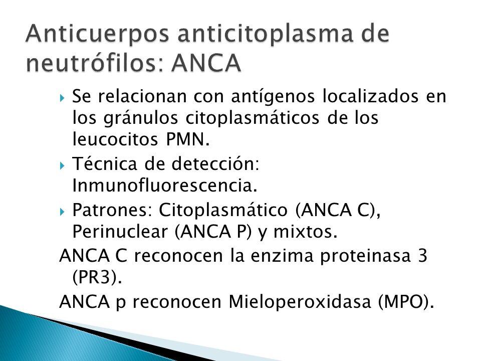 Se relacionan con antígenos localizados en los gránulos citoplasmáticos de los leucocitos PMN. Técnica de detección: Inmunofluorescencia. Patrones: Ci