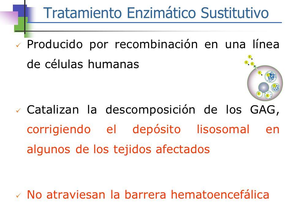 Tratamiento Enzimático Sustitutivo Producido por recombinación en una línea de células humanas Catalizan la descomposición de los GAG, corrigiendo el