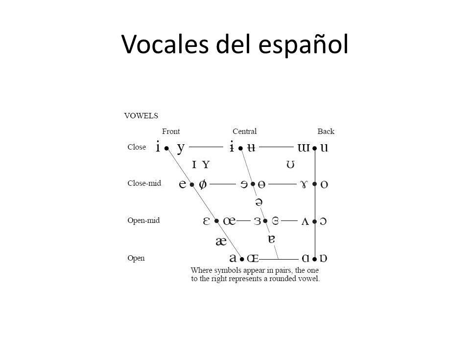 Características desde el punto de vista fonético Mayor abertura órganos articulatorios Mayor número de vibraciones cuerdas vocales Máximo de armónicos (musicalidad) Único sonido capaz de constituir nucleo silábico