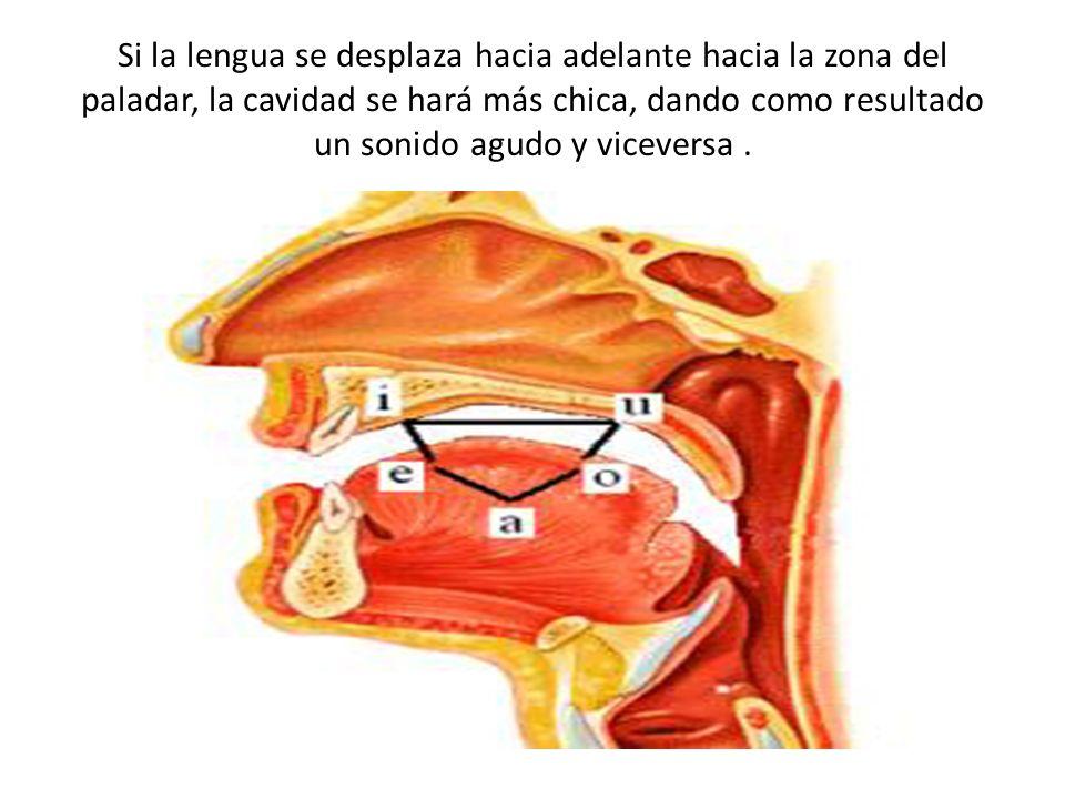 Clasificación de las vocales desde el punto de vista fisiológico 1.Vocales altas, medias y bajas: a) Si la lengua se acerca en grado máximo al paladar tendremos una vocal alta o cerrada, es el caso de [i, u].