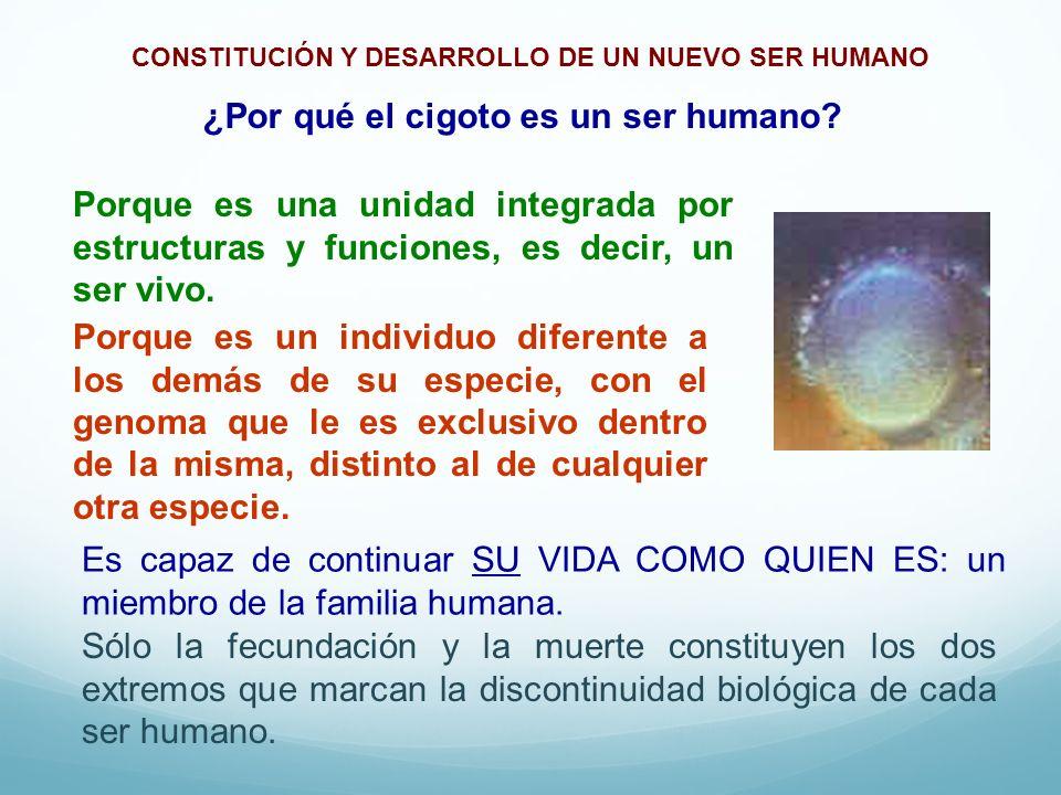 ¿Por qué el cigoto es un ser humano? Porque es un individuo diferente a los demás de su especie, con el genoma que le es exclusivo dentro de la misma,