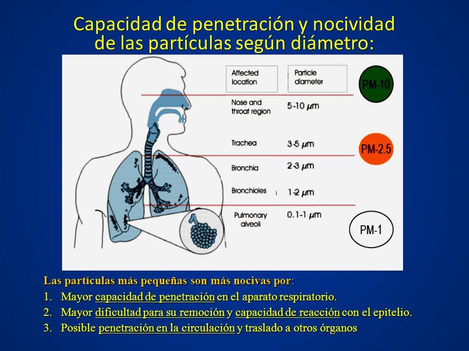 Capacidad de penetración y nocividad de las partículas según diámetro: Las partículas más pequeñas son más nocivas por: 1.Mayor capacidad de penetraci