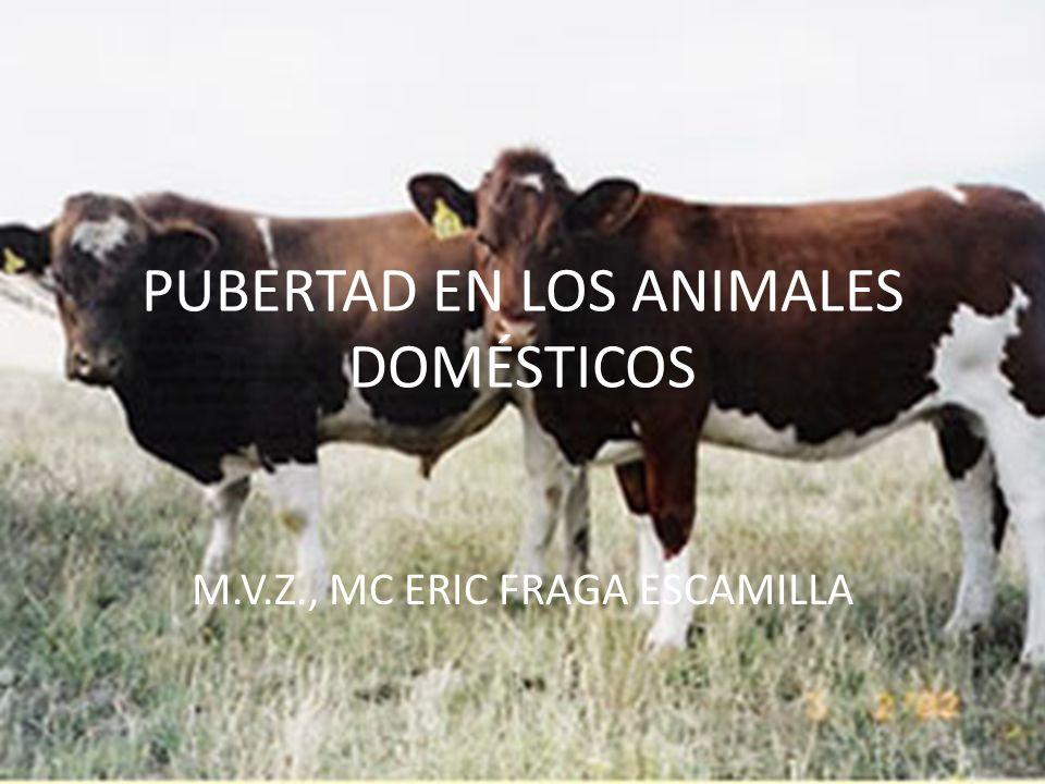 PUBERTAD EN LOS ANIMALES DOMÉSTICOS M.V.Z., MC ERIC FRAGA ESCAMILLA