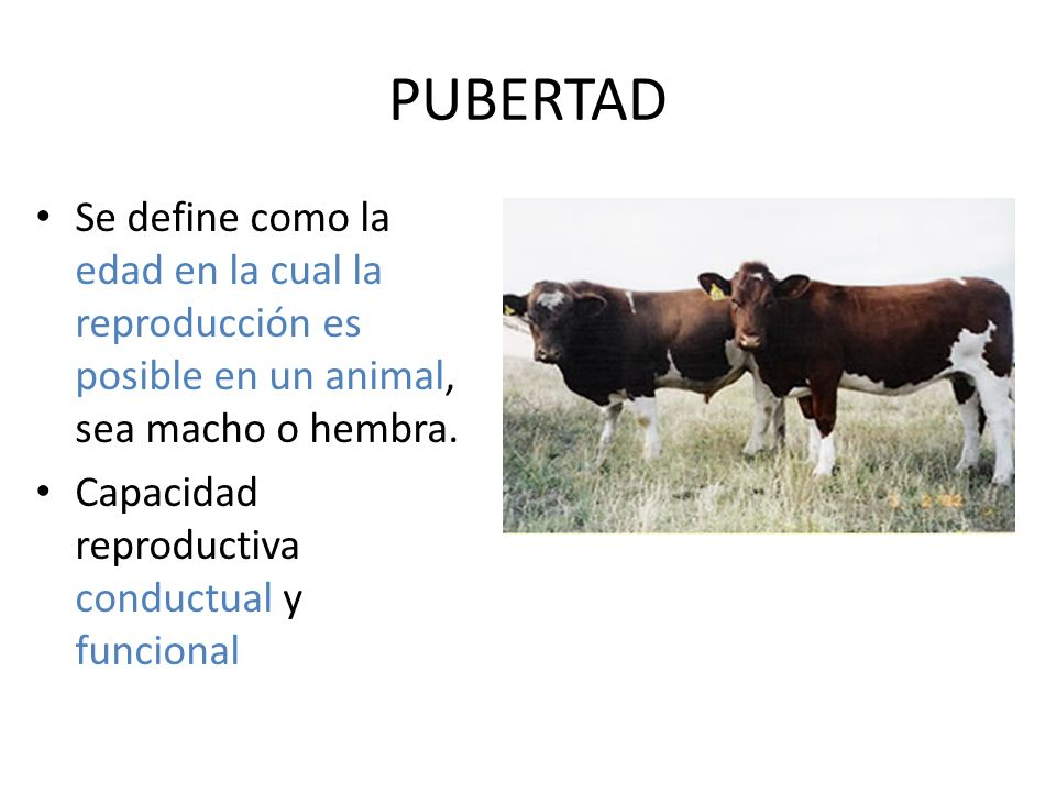 PUBERTAD Se define como la edad en la cual la reproducción es posible en un animal, sea macho o hembra.