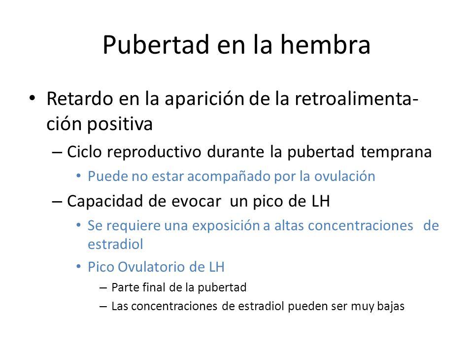 Pubertad en la hembra Retardo en la aparición de la retroalimenta- ción positiva – Ciclo reproductivo durante la pubertad temprana Puede no estar acompañado por la ovulación – Capacidad de evocar un pico de LH Se requiere una exposición a altas concentraciones de estradiol Pico Ovulatorio de LH – Parte final de la pubertad – Las concentraciones de estradiol pueden ser muy bajas