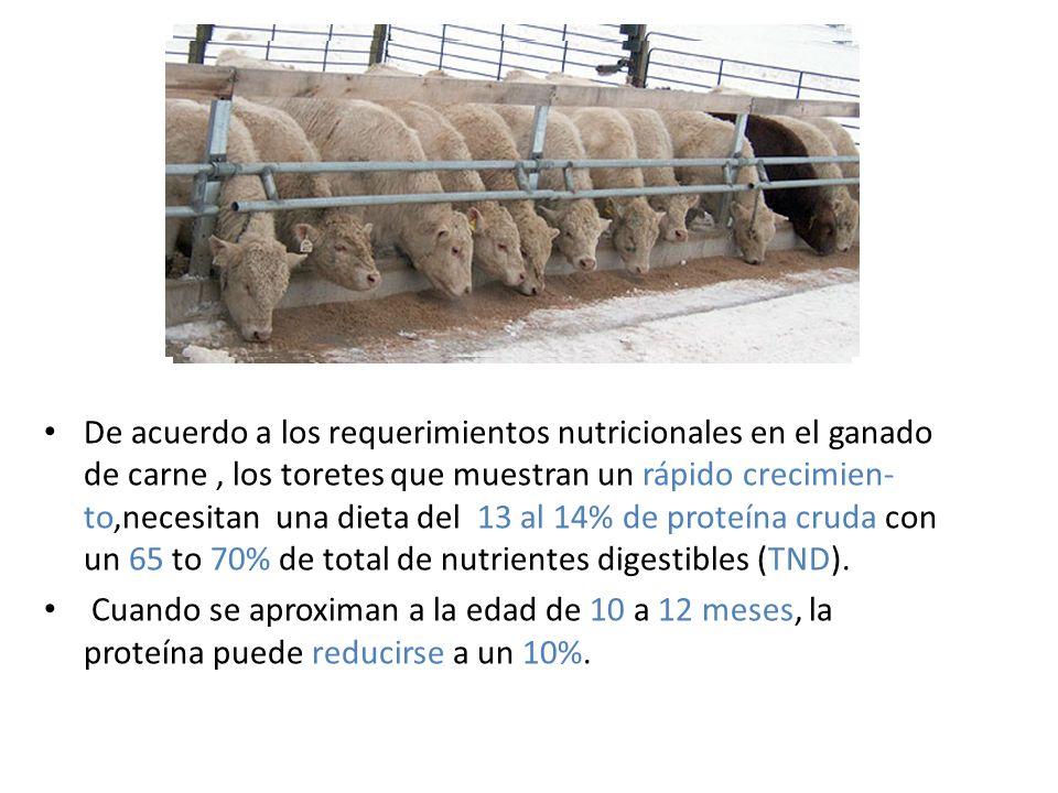 De acuerdo a los requerimientos nutricionales en el ganado de carne, los toretes que muestran un rápido crecimien- to,necesitan una dieta del 13 al 14% de proteína cruda con un 65 to 70% de total de nutrientes digestibles (TND).