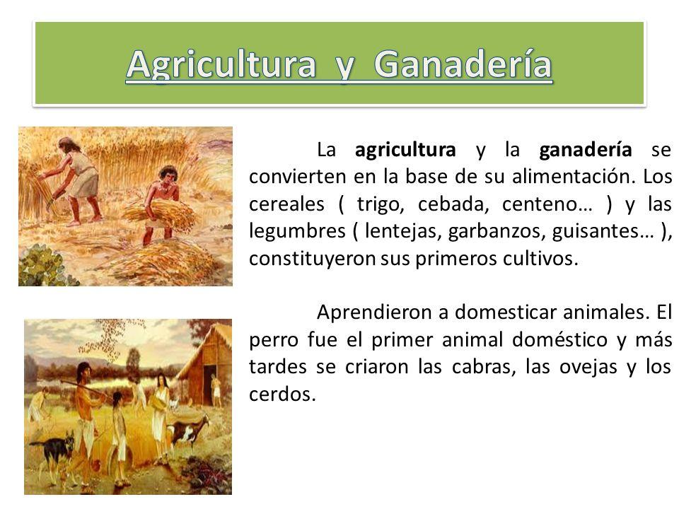 La agricultura y la ganadería se convierten en la base de su alimentación. Los cereales ( trigo, cebada, centeno… ) y las legumbres ( lentejas, garban
